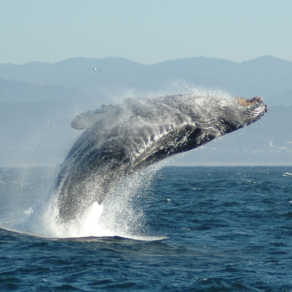 sail maui Whale Watching Tours Maui