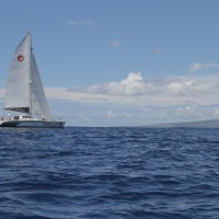 Sail Maui Catamaran Paragon on private sailing charter