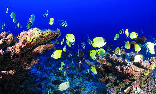 coral-gardens-maui-snorkeling-tour