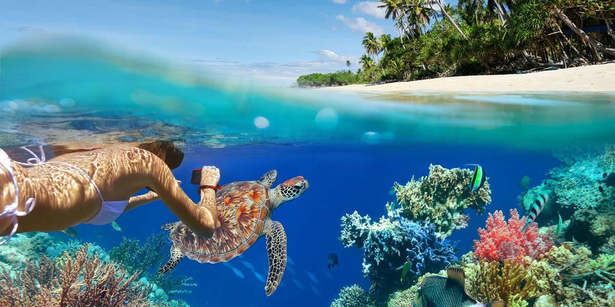 the magic of hawaiian sea turtles sail maui
